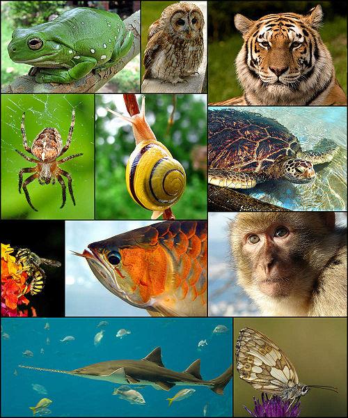 Zoology diversity